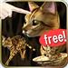 可以尽情抚摸可爱的孟加拉猫的免费宠物猫应用!钟爱猫咪!爱情是更多的猫!